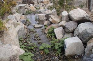 造園用井戸